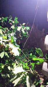 """Darleen Boyle in Dogwood (Bossier Parish) reports hearing a """"loud bang"""" before finding an oak tree uprooted and across the front yard. It caused some damage to their home."""
