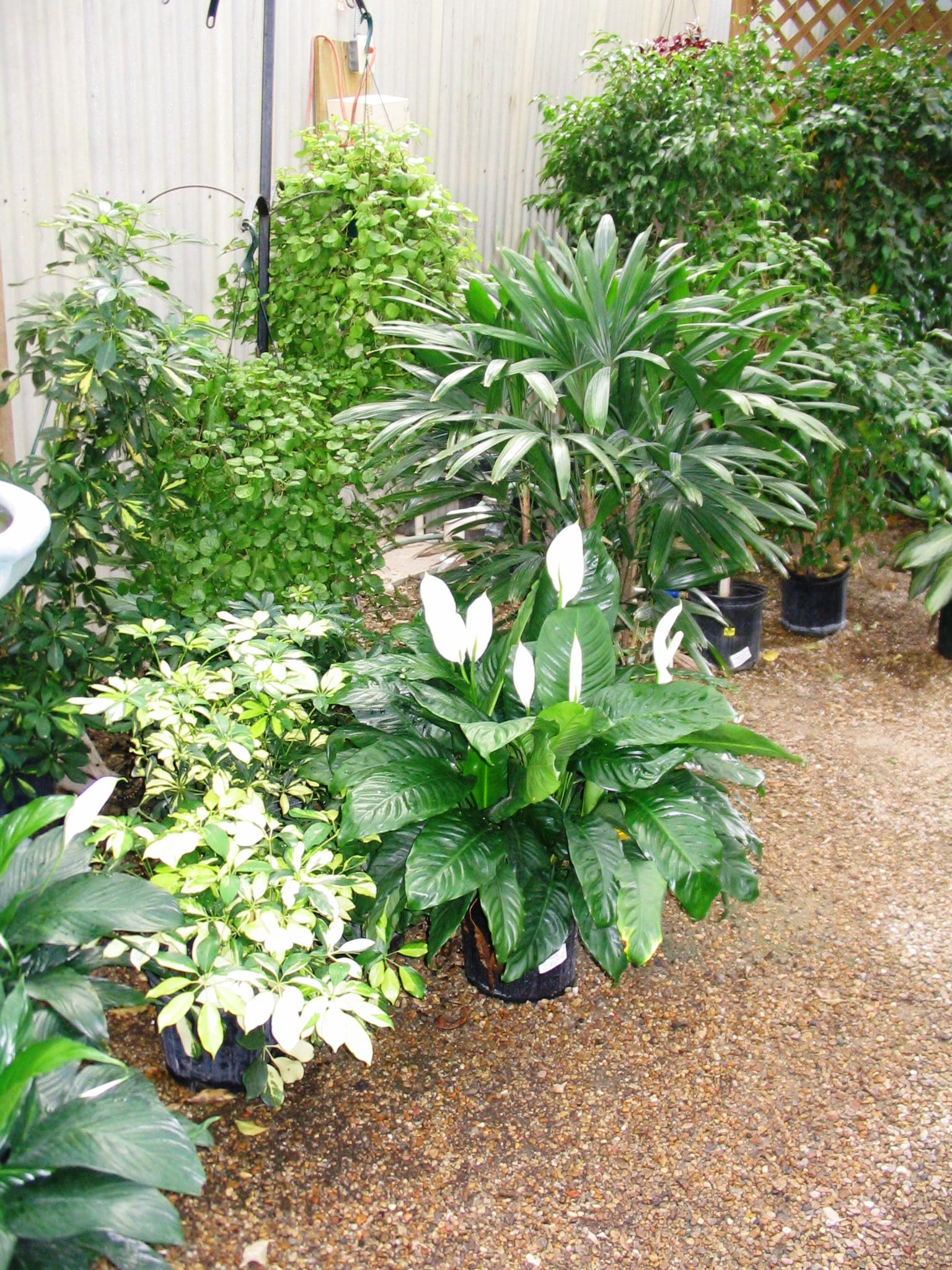 Get It Growing: Tropical plants need winter shelter ...